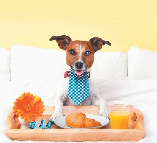 """Creche e Hotel para Cães """"Ossos do Ofício"""""""