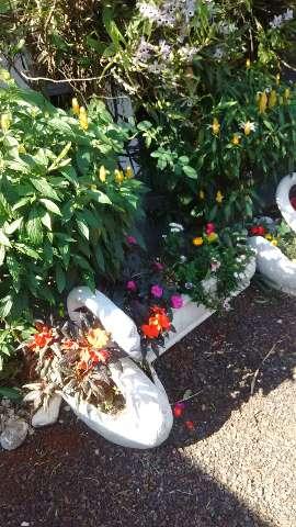 Sanferflora jardins e paisagens em Londrina - Parana