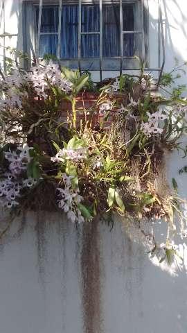 Consultoria e assessoria em jardinagem e paisagismo Montelibano
