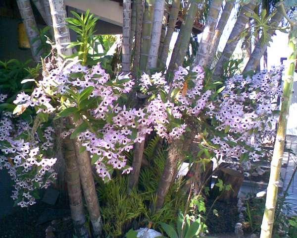 GARDEM-Mudas de orquideas e arranjos - jardinagem paisagismos londrina