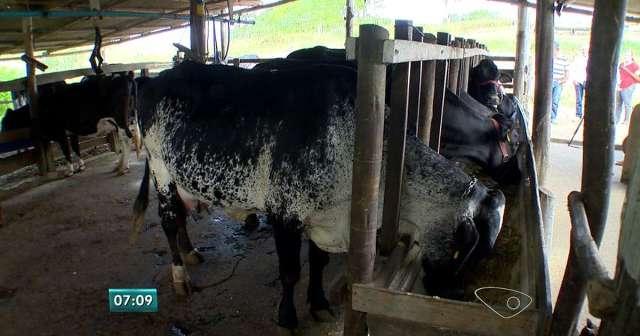 Socoxo Flay - Seu Animal Sem Moscas e Carrapatos Pote 01kg.